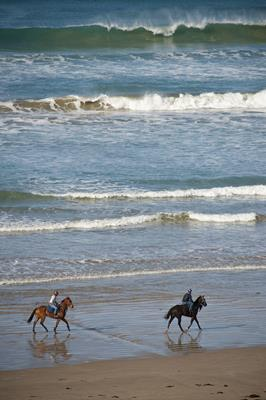 Horses on the beach: a great place to visit in Victor Harbor.  Image © SATC; Mike Annese. This photo sponsored by Shoes - Retail Category.