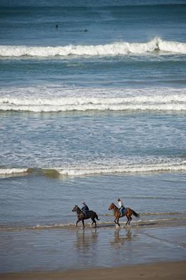 Horses on the beach: a great place to visit in Victor Harbor.  Image © SATC; Mike Annese. This photo sponsored by Cleaners Category.