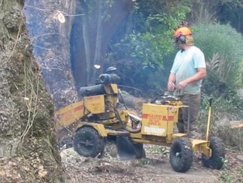 Victor Harbor Locality List  Image . This photo sponsored by Stump Removals Category.